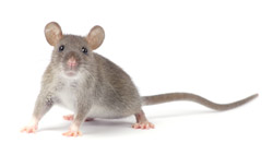 commercial pest control northern beaches
