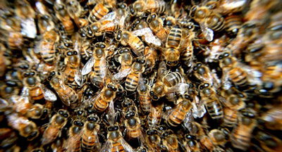 bee removal northern beaches