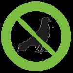 bird control northern beaches